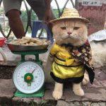 """'Meo meo hoàng thượng"""" vi hành xem tình hình chợ búa dịp Tết – Cười ra nước mắt"""